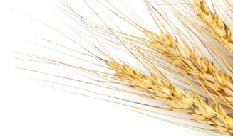 Wheat Sheath